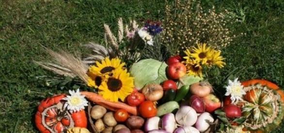 Alimentos orgânicos ocupam a mesa dos brasileiros