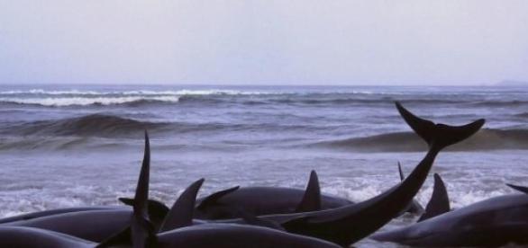 Flinders Bay, Western Australia, 1986