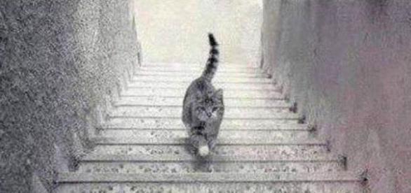 El gato en la escalera (IMGUR)