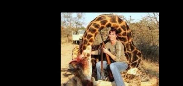 Ivy Swanepoel und die tote Giraffe.