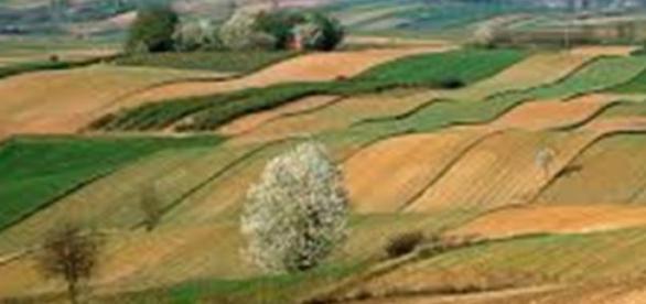 NIK o uprawach ekologicznych