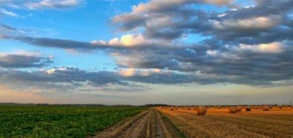 Analista de manejo de agroecossistemas