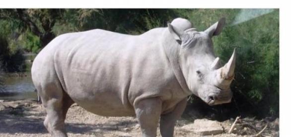 La especie está al borde de la extinción