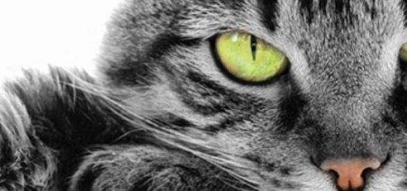 Pisicile ne vorbesc, noi doar trebuie sa intelegem