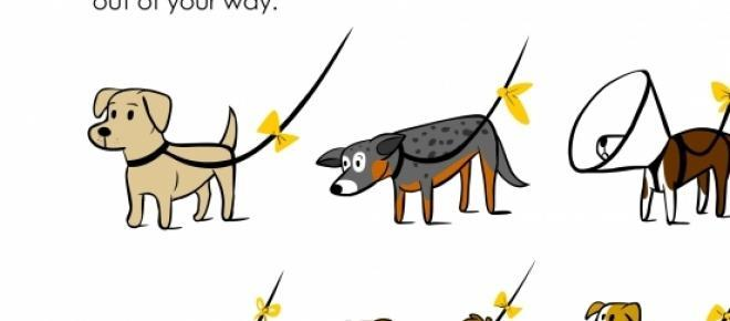 Projekt żóta wstążka / Yellow dog project