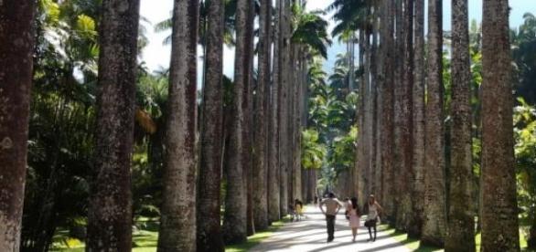 Jardim Botânico abre vaga para Desenvolvedor.