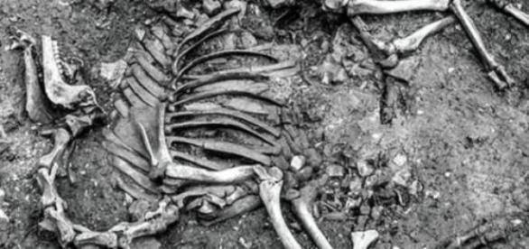 Scheletul unei camile descoperit in Austria