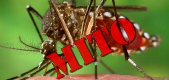 Mitos sobre a dengue. (Foto)