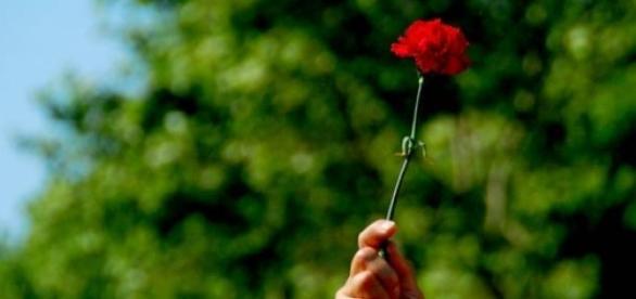 Cravo vermelho é símbolo de liberdade