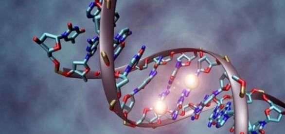 foto: Molécula de DNA - autor: Christoph Bock