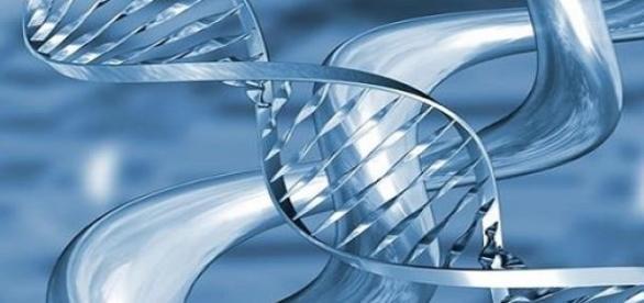 El ADN se comporta como un yoyo