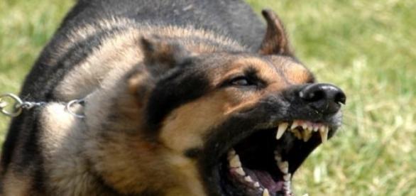 Psicología canina ¿Ayuda o estafa?
