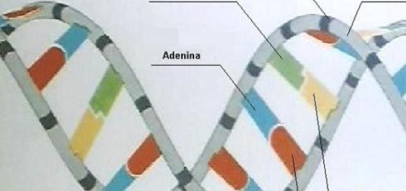 DNA: Zukunft der Medizin