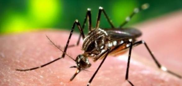 A picada do mosquito pode trazer doenças graves