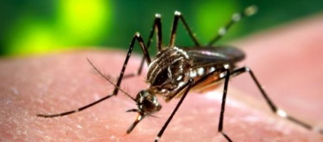 Porque mordem os mosquitos mais umas pessoas que outras?