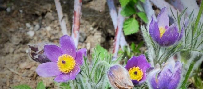 Oznaki wiosny w przyrodzie