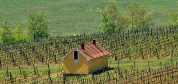 Estilo de una viña y bodega húngara
