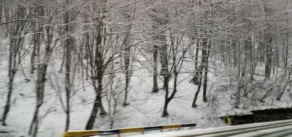 Zăpadă aşternută pe carosabil