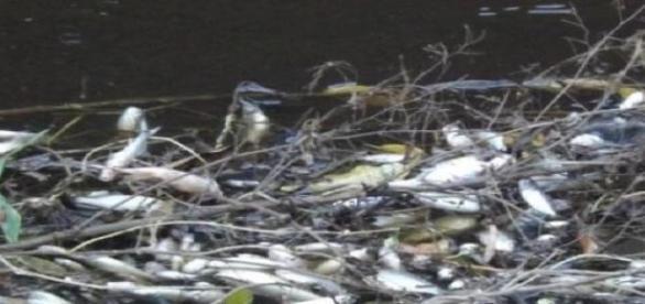 Peixes mortos podem ter ligação com o incêndio