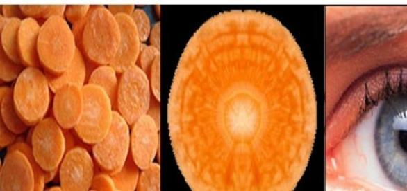 Alimente care se aseamana organelor corpului uman
