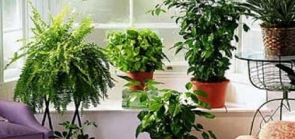 Plantele sunt benefice pentru sanatate.