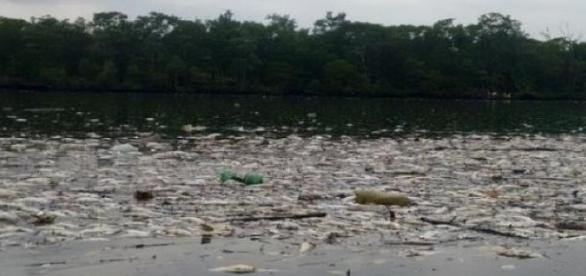 Milhares de peixes foram encontrados mortos