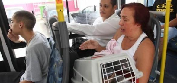 Lei permite animais serem transportados.