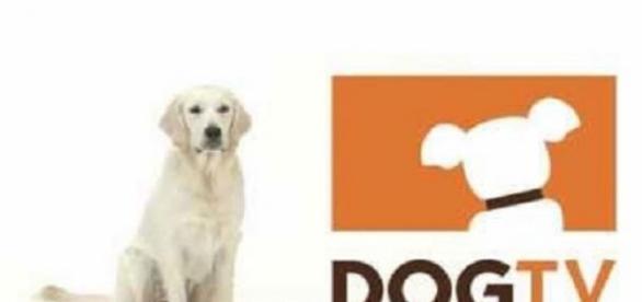 DogTV é um canal feito para os cães
