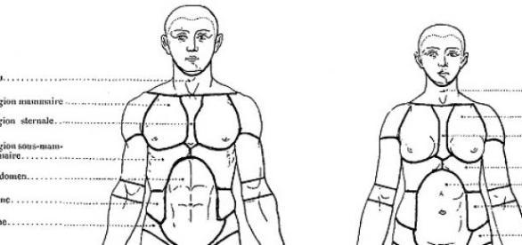 Une étude montre les différences hommes-femmes.