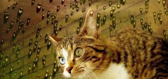 Murakami es amante de los gatos y lo plasma