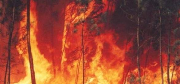As chamas foram alastradas pelo vento.