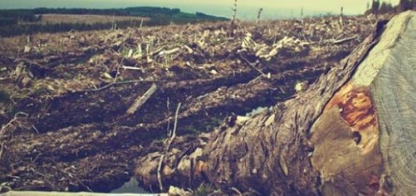O desmatamento consome e destrói a nossa natureza