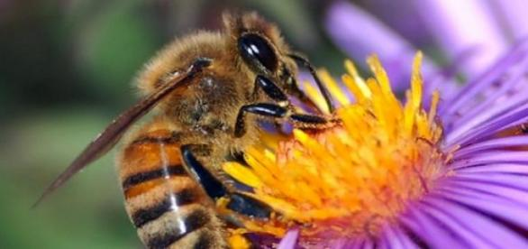 Ségolène Royal veut sauver les abeilles