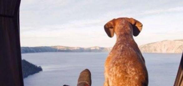 Un hombre y su perro, compañeros de vida