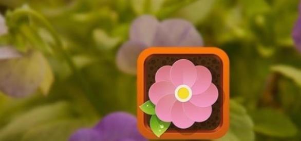 A app Flower Power ajuda a ter plantas em casa.