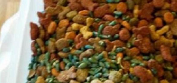 Comida envenenada no Parque CCL-Costa Nova