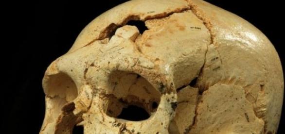 Craniul de proto-Neanderthal analizat