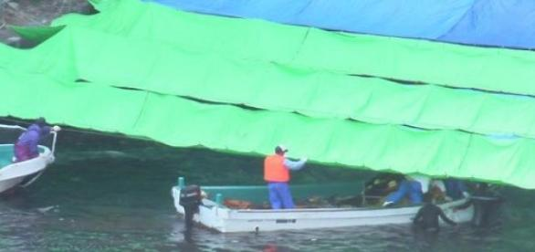 Fishermen from Taiji trying to hide the slaughter