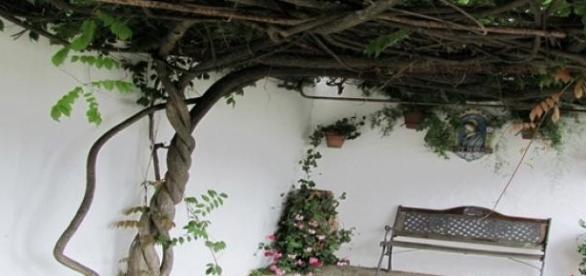 Przydomowe patio.fot.J.Lampert