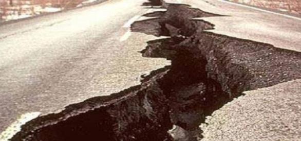 Animais conseguem prever terramotos