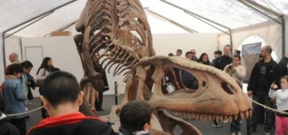 La muestra de dinosaurios, imperdible