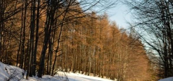 Pădurea în timp de iarnă.