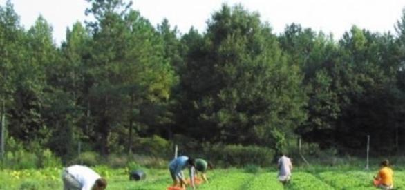 70 de români sclavi în Spania