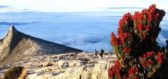 Monte Kinabalu - CC-by A. Steiner