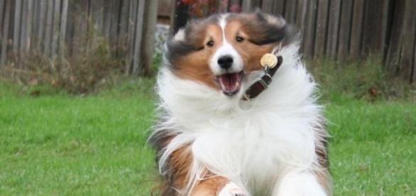 Une application pour les fans de chiens