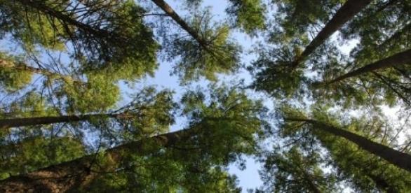 Piękne polskie lasy to dobro narodowe