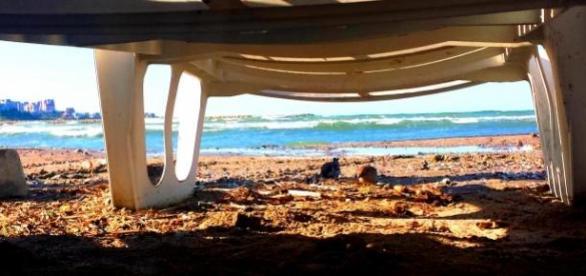 Sub şezlong, la adăpost de razele soarelui...