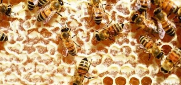 La apicultura y sus productos derivados