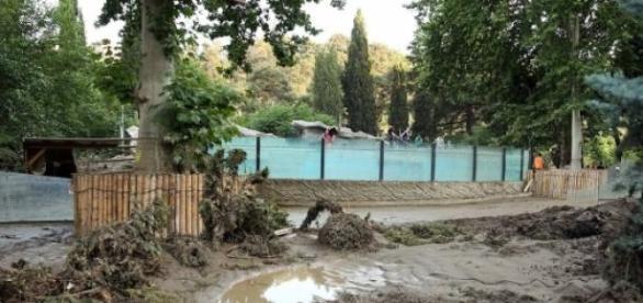 Os efeitos da inundação no Jardim Zoológico