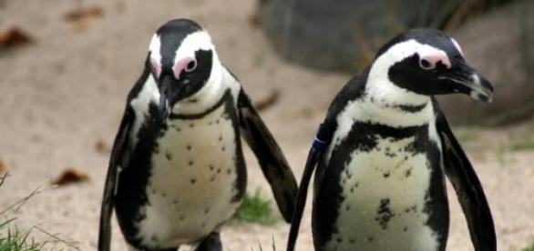 Veja vagas para atuar com pinguins